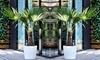 2 et 4 palmiers de Chine 30-40 cm