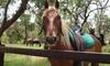 45-Min Scenic Horse Ride for 2