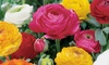 Buttercup Ranunculus Double Blooming Bulbs (25-Pack)