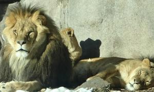 Up to 42% Off Admission or Membership at Lake Superior Zoo at Lake Superior Zoo, plus 9.0% Cash Back from Ebates.