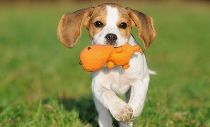 image for Two, Three, or Five Days of Doggie Daycare at freeDOGm (Up to 60% Off)