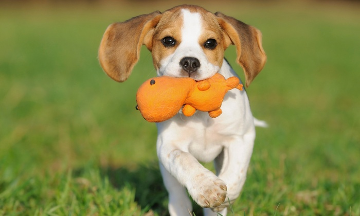 freeDOGm - freeDOGm: Two, Three, or Five Days of Doggie Daycare at freeDOGm (Up to 60% Off)