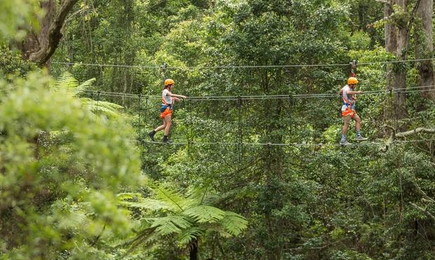 Illawarra Zipline Adventure Tour Treetop Walk