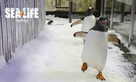 SEA LIFE Sydney Aquarium Entry + Meal: Child Aged 415 $31 or Adult $44, Darling Harbour Up to $58.95 Value*
