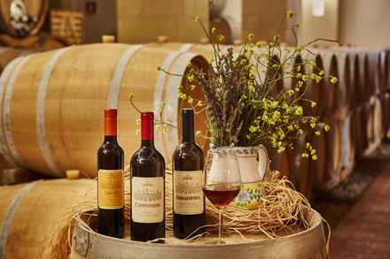 Degustazione di vini biologici a Marsala