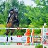 3 o 5 lezioni di equitazione o scuola pony