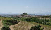 Cata especial dirigida para 2 o 4 personas con visita a bodega y viñedos desde 24,90 € en Bodega Carlos Moro