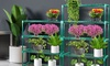 Set of Two Four-Tier or Five-Tier Greenhouse Plant Storage Racks