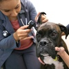 96% Off an Online Veterinary Assistant Course