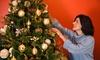 Tree Man - Springfield, MA: $81 Off $144 Worth of Tree Farm / Christmas Tree Farm