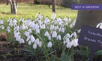 Birkheads Snowdrop Special Event, Entry for Two, 25 February - 5 March, Gateshead (Up to 55% Off)