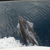 Dolphin Cruisewith Lunch