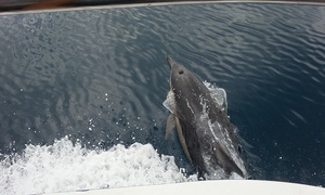 Dolphin Planet & Dreamweaver Charters: Dolphin Cruise - Child ($55), Adult ($95) or Family ($295) with Dolphin Planet & Dreamweaver Charters (Up to $395 Value)