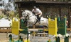 Up to 54% Off Skill Lessons at Clay Jackson Stables
