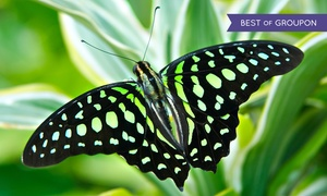 The Butterfly Place: $17 for Admission for Two at The Butterfly Place (Up to $25 Value)