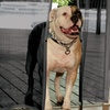 Hands-Free Mesh Door Screen