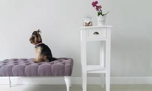 CHICHI DOG: Strzyżenie psa od 65,99 zł i więcej opcji w salonie CHICHI DOG (do -48%)