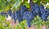 Pre-Order: Grapes Concord or Niagara Bare Root Plant