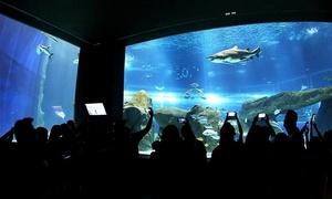 AquaRio: Passaporte individual ou família para o AquaRio – Gambôa