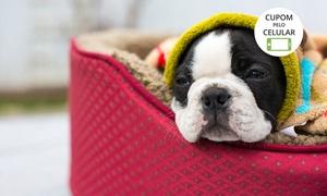 PetGatô Clínica Veterinária: PetGatô Clínica Veterinária - Jardim das Américas: 1, 3 ou 6 meses de banho e tosa higiênica para cachorros