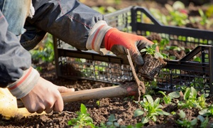 Michael and Conners Yard Work Services: $24 for $50 Worth of Services — Michael and Conner's Yard Work Services
