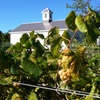 Up to 32% Off at Appolo Vineyards