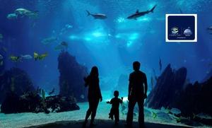 Aquarium Mare Nostrum: A la découverte de la vie sous-marine pour 1 adulte (à partir de 11 ans) et 1 enfant à 19,90 € à l'aquarium Mare Nostrum