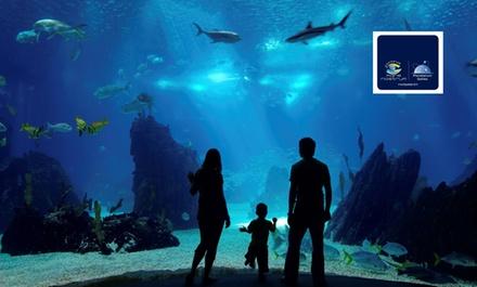 A la découverte de la vie sous marine pour 1 adulte (à partir de 11 ans) et 1 enfant à 19,90 € à laquarium Mare Nostrum