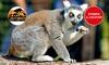 Ingressi allo Zoo d'Abruzzo
