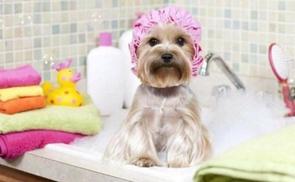 Peluquería Canina Diana: Spa para perros de hasta 10, 20 o 45 kg con jacuzzi, lavado, peinado y más desde 7,90 € en Peluquería Canina Diana