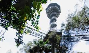 Illawarra Fly: Rainforest Treetop Adventure with Food and Drink for $25 at Illawarra Fly, Knights Hill (Up to $41 Value)