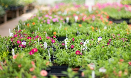 Plants and gardening supplies perreault nurseries groupon for Gardening 4 less groupon