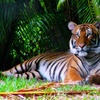 Up to 31% Off at Palm Beach Zoo & Conservation Society