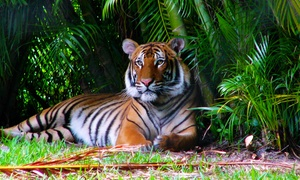 Up to 31% Off at Palm Beach Zoo & Conservation Society at Palm Beach Zoo & Conservation Society, plus 6.0% Cash Back from Ebates.