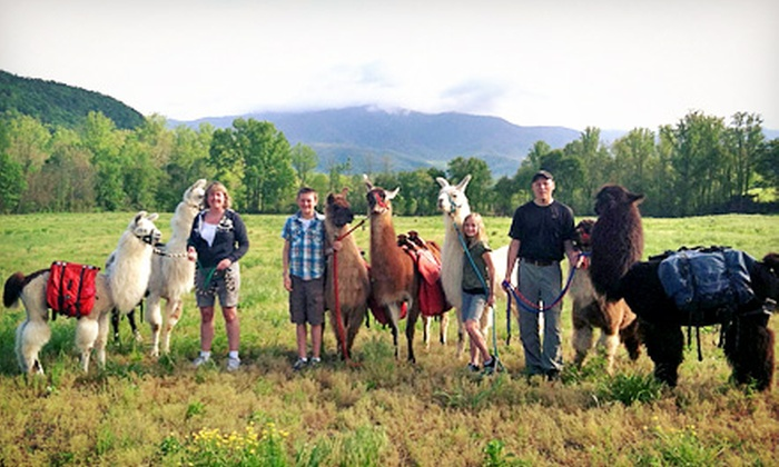 Smoky Mountain Llama Treks - Cosby: Llama Trail Trek and Farm Visit for Two, or Farm Visit for Two or Four from Smoky Mountain Llama Treks (Half Off)