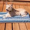 FurHaven Indoor Outdoor Cooling Gel Top Pet Dog Bed