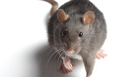 image for Rodent-Inspection Service from Quality Pro Guard (44% Off)