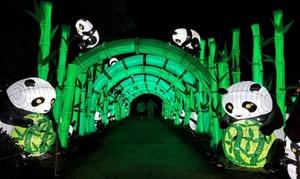 China Lights Admission