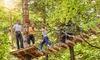 Parco Avventura Tree Experience Rescaldina - TREE EXPERIENCE (RESCALDINA): Parco Avventura Tree Experience di Rescaldina: fino a 4 ingressi per adulti e bambinipiù frisbee (sconto fino a 56%)