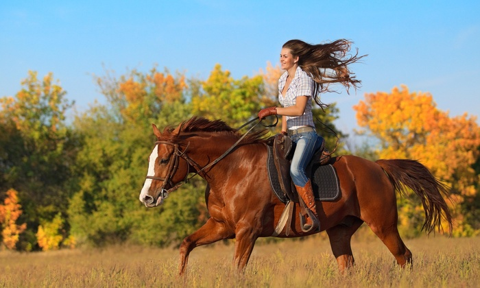 Kilham Farm - Nicasio: 10% Off First Time Adult Horseback Riding Lessons  at Kilham Farm