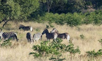 Picnic and Game Drive for Two for R249 at Madidaba Game Lodge