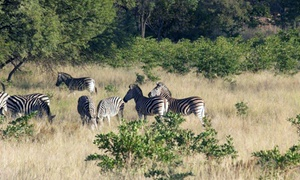 Madidaba Game Lodge: Picnic and Game Drive for Two for R249 at Madidaba Game Lodge