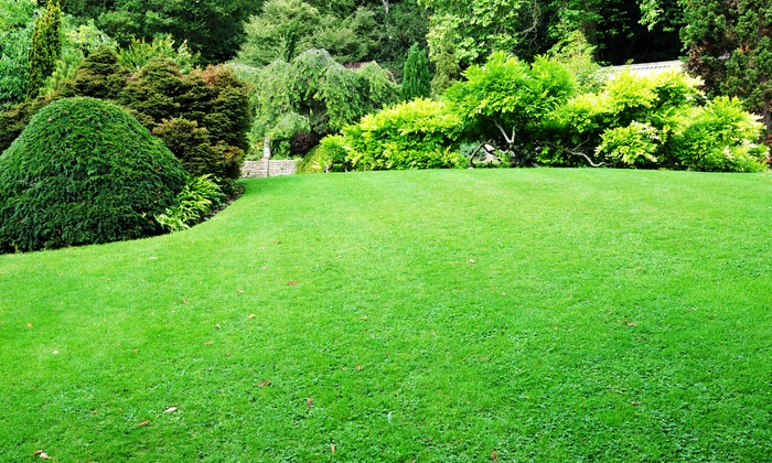 null - North Jersey: $99 for One Year of Lawn Service with Five Treatments from Lawn Doctor of Dover-Rockaway ($225 Value)