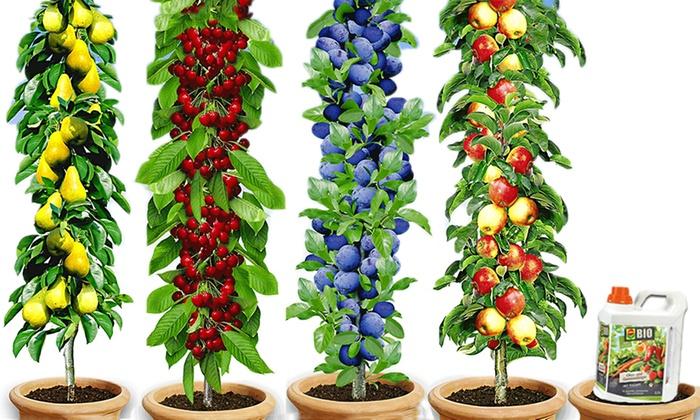 Bis Zu 48 Rabatt Säulen Obst Kollektion Groupon