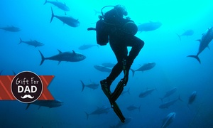 New Zealand Diving: Two Hunter & Gatherer Scuba Dives + Gear Hire for 1 ($145) or 2 ($290) People from New Zealand Diving (Up to $390 Value)