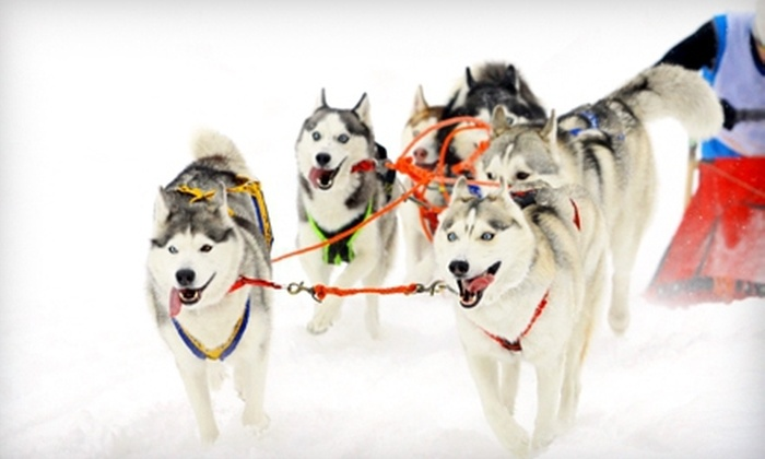 MUSHERS Dog-Sled Tours - Warren: Dogsledding Tour for a Child or Adult from MUSHERS Dog-Sled Tours (Half Off). Three Options Available.