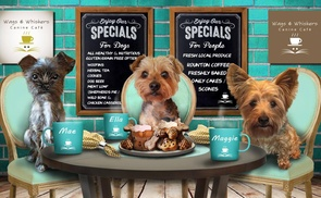 Wags & Whiskers Canine Cafe: Lunch for Two or Four People and Dogs at Wags & Whiskers Canine Cafe