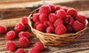 Raspberry 'Autumn Bliss'  Plant