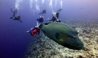 【最大85%OFF】経験豊富なスタッフがしっかりサポート。憧れの海の世界への第一歩≪ダイビング専用プールで体験ダイビング(学科講習付き)...
