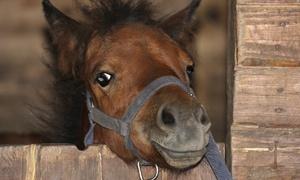 Les Roseaux de Goulaine: Promenade à poney d'1h pour 1 ou 2 enfants dès 11,90 € au centre équestre Les Roseaux de Goulaine